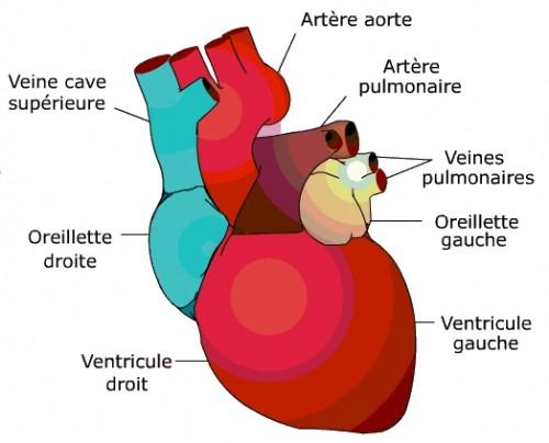 Coeur.JPG